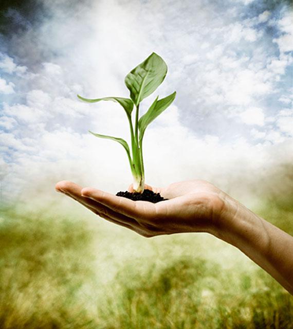 Career in Environmental Studies